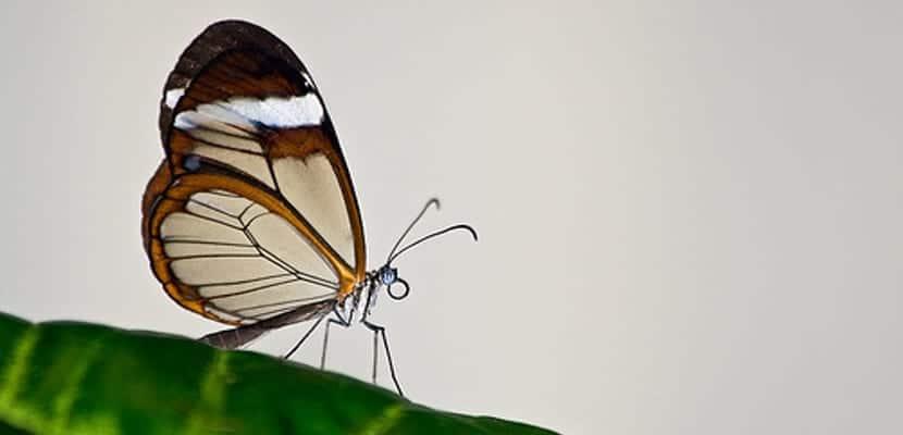 Unas alas de mariposa cubrirán nuestros eReaders